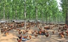 <b>贵州丹寨:生态循环种养殖帮助农户脱贫致富</b>
