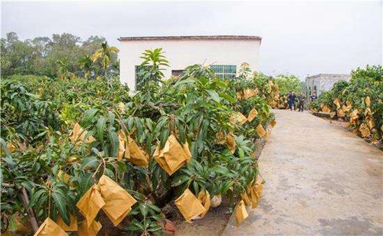 <b>黑龙江桦川县:发展庭院经济增加贫困户收入</b>