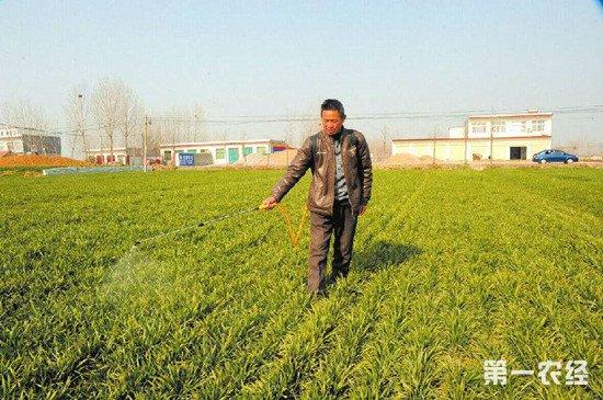 山东省农业厅发布秋冬小麦管理注意事项