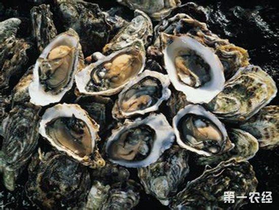 水产品集中上市价格涨跌不一 海参牡蛎价格高位运行