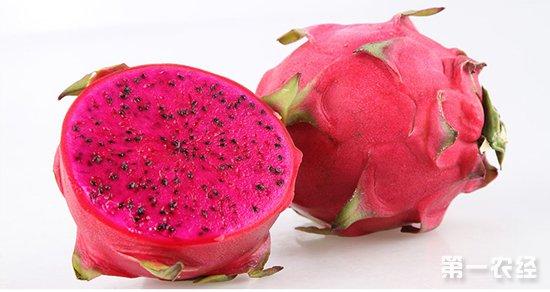 红心火龙果要怎么种?红心火龙果的种植技术