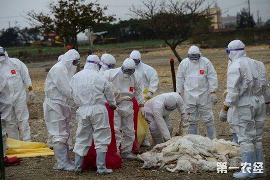 鸡禽流感有什么症状?要如何防治?