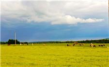 爱尔兰食品局宣布 中国已成为其第二大乳品出口国