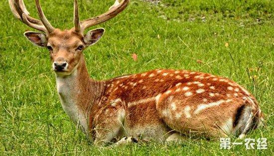 鹿舍消毒要注意什么?鹿舍消毒常见的误区