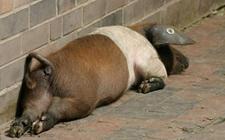 <b>什么是僵猪?僵猪的产生原因及防治方法</b>
