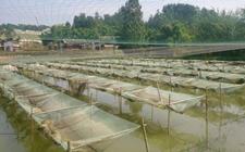 怎样用网箱养殖小龙虾?小龙虾网箱养殖技术