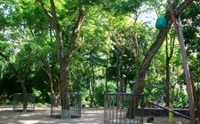 海南两棵枯死的大树,被卖出1428万的高价!