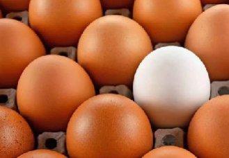 十七年来的蛋价的规律和走势分析