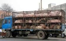 <b>葡京网址葡京网址部:运生猪车辆需备案,否则1个月后或将不能上路</b>
