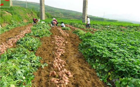 内蒙古互利村集体脱贫 农村集体产业让农民摆脱贫困