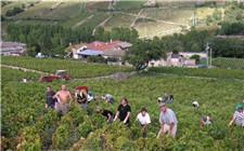 法国十大葡萄酒产地介绍 来自这的葡萄酒都不会差