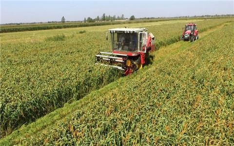 河北省出台意见 制定全省农村产业发展目标