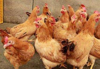 <b>产蛋鸡存栏恢复缓慢,蛋价季节性上涨是为主流</b>