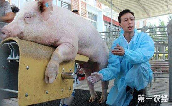 简易猪画法步骤