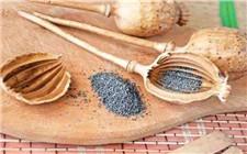 罂粟壳底料竟被卖进学校食堂 安徽省判决一起有毒有害食品案