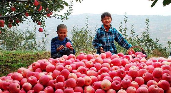 甘肃推动果品产业转型升级 做强果品扶贫产业
