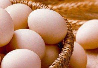 2018年11月15日养鸡市场行情如何?今日养鸡行情概述