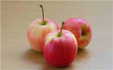 河北保定启动苹果品牌战略 让保定苹果走上高质量发展道路