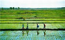 农村可能用得上的一些保险介绍