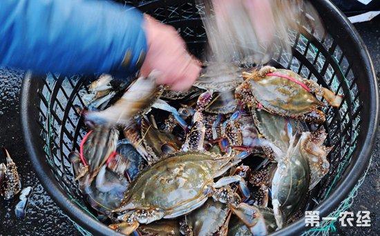 山东威海水产品价格涨跌互现 鲍鱼价格小有波动梭子蟹货足价降