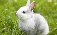 <b>兔子常见的疾病有哪些?兔子常见疾病介绍</b>