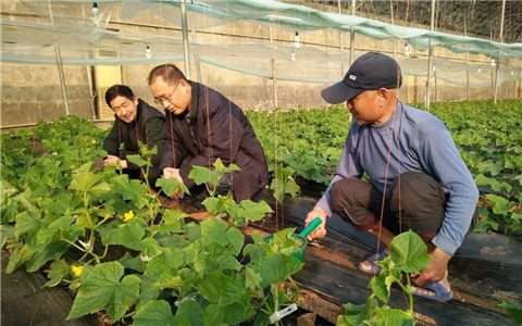 山东省推出若干措施 全力推进乡村人才振兴