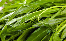 最毒的蔬菜是空心菜?看似有理其实站不住脚