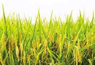 水稻食品安全追溯系统已落户内蒙古乌审旗 为全国首个