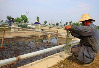 四川泸县:大力发展绿色畜牧业 推广生态循环模式