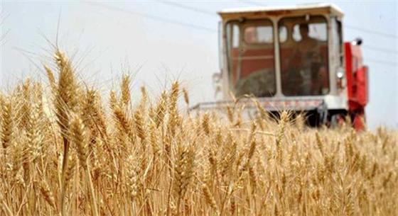 2019年小麦最低收购价将下调3元