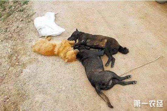 晚上毒狗白天卖狗肉汤锅 驻马店一对夫妇被刑拘