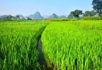 <b>科技助力农业高质量发展,帮农民增产增收</b>