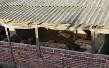 养猪场冬季怎么保温?养猪场冬季常见的保温方法