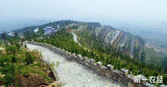 山东济宁:林业产业蓬勃发展 荒山变森林公园