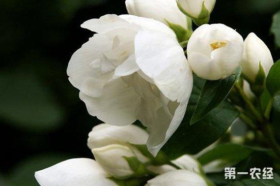 什么花冬天要室内养护?怕冷的花卉植物有哪些?