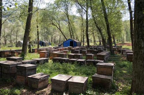 蜂蜜大量滞销 蜂农诉苦:42.5度蜜只能喂蜂!