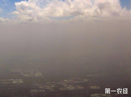 澳大利亚新南威尔士州:罕见遭沙尘暴与林火侵袭双重夹击