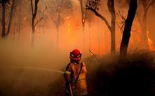 <b>澳大利亚新南威尔士州:罕见遭沙尘暴与林火侵袭双重夹击</b>