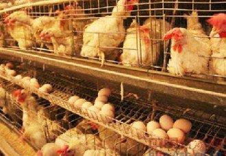 <b>8000斤问题鸡蛋流入市场,山西一养殖场老板被判刑罚款</b>
