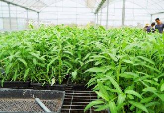"<b>""湿旱轮作""模式,让农业种植更有效率</b>"