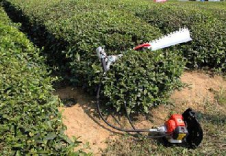 陕西正阳镇进行茶园冬季管理 为来年茶园增产打下基础