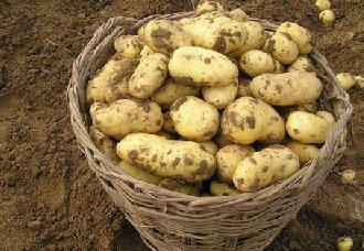 <b>7项核心技术推动马铃薯产业绿色发展</b>