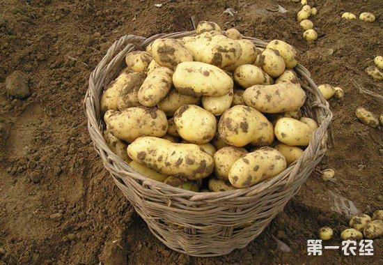 7项核心技术推动马铃薯产业绿色发展