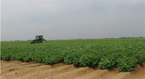 """新疆成功试验""""沙漠土壤化"""" 获得生态经济双重效益"""