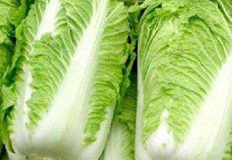 <b>河北石家庄:千亩白菜迎来丰收 却惨遭滞销</b>