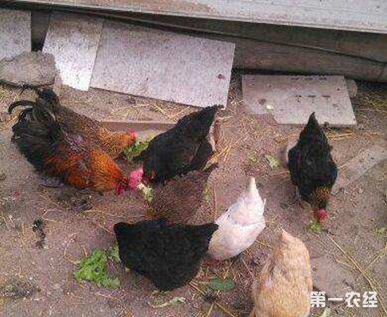 """""""禁养""""政策实施后,哪些养殖场能获得补偿?"""