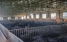 养猪场冬季常见的保温方法的优缺点及注意事项