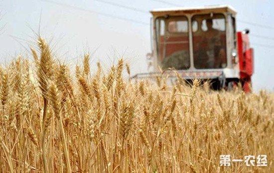 明年小麦最低收购价调低 小麦主产区对市场依然保持乐观