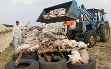 <b>湖南省常德市:非洲猪瘟防控工作再加压</b>
