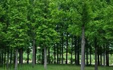 重庆为保护林业生态设立检察室 一年来涉林案件下降9.8%